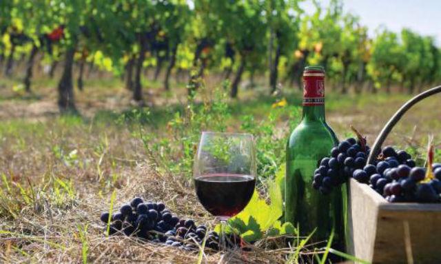 Georgian wine_tourism