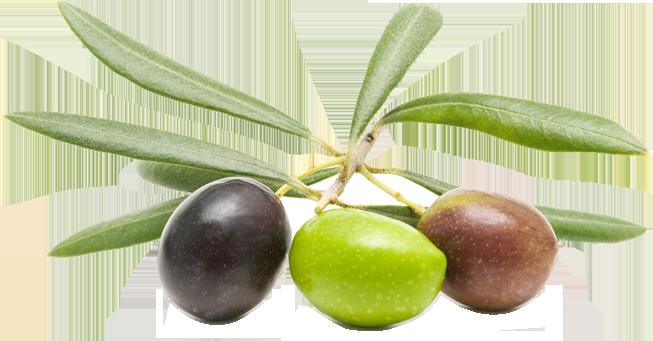 olive1 (1)